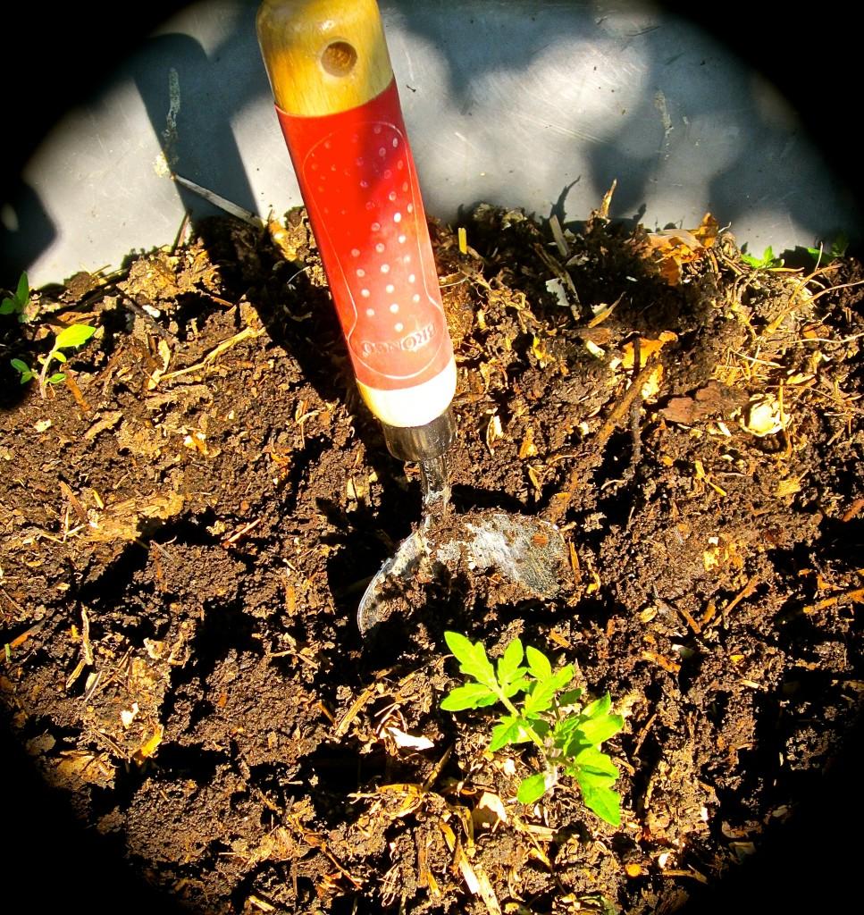 Soil/compost – Master Gardener Foundation of Thurston County
