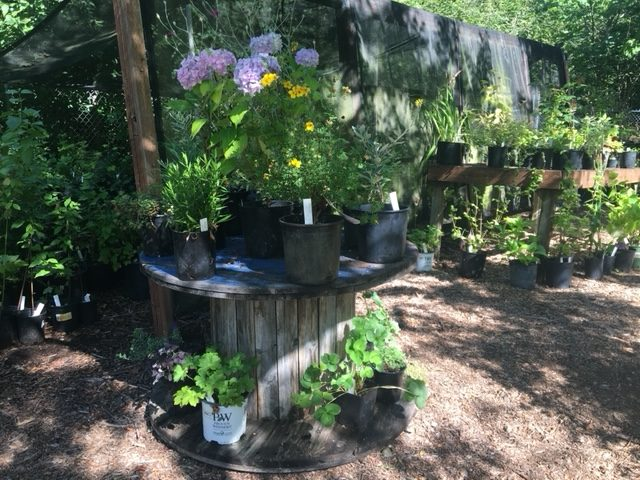 This image has an empty alt attribute; its file name is Plant-Sale-Tables-rotated.jpg